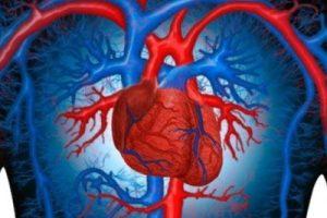 Сердце из кожи