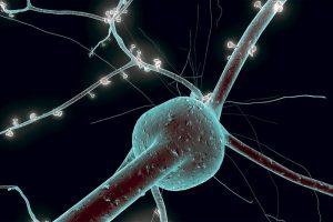 Имплантация нейрональных клеток, полученных из эмбриональных стволовых клеток