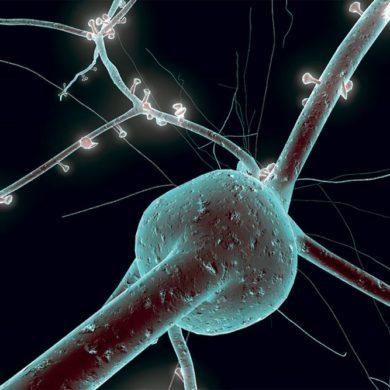Имплантация нейрональных клеток