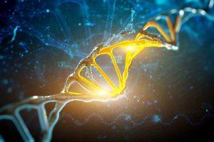 Регенерация всего тела - генные переключатели и ДНК
