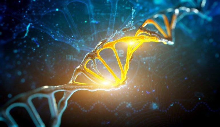 Генетические переключатели, которые управляют процессом регенерации всего тела