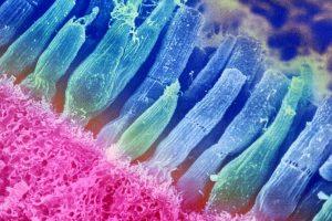 Одним дополнительным геном удалось восстановить зрение