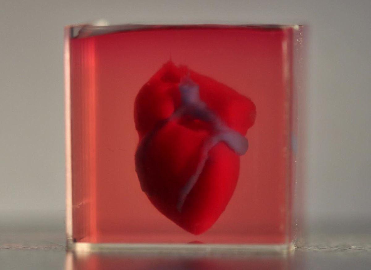 Напечатанное израильскими учеными 3D сердце