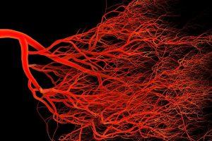 Создание новых кровеносных сосудов