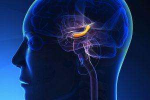 Сахар, поступающий в мозг во время септического шока, вызывает потерю памяти