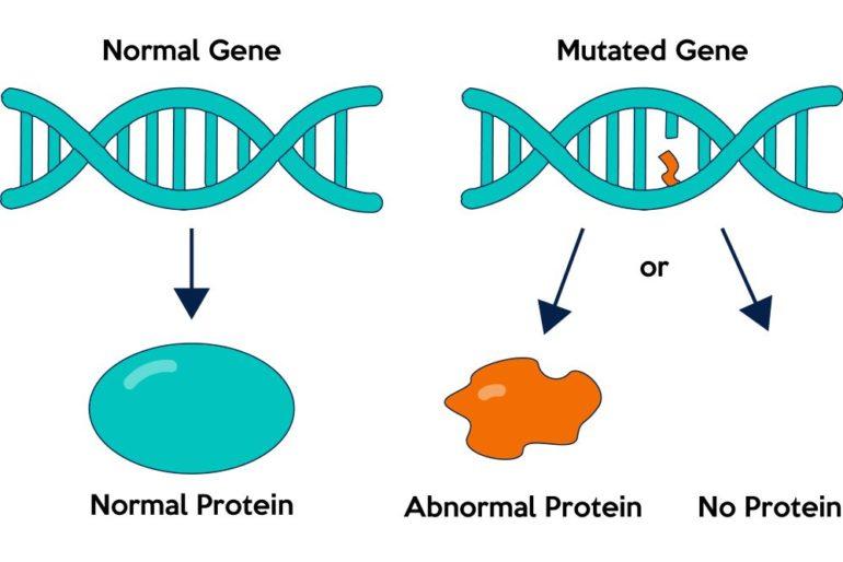Редкие мутации генов могут предотвратить сердечные заболевания