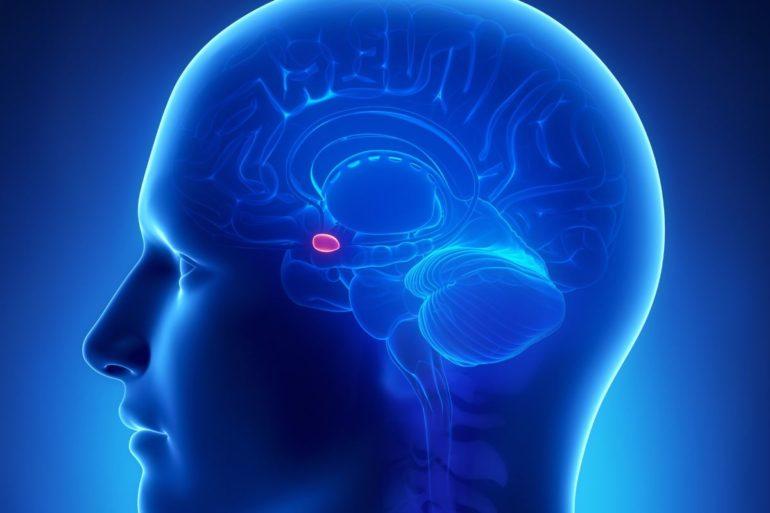 Нейроны, влияющие аппетит