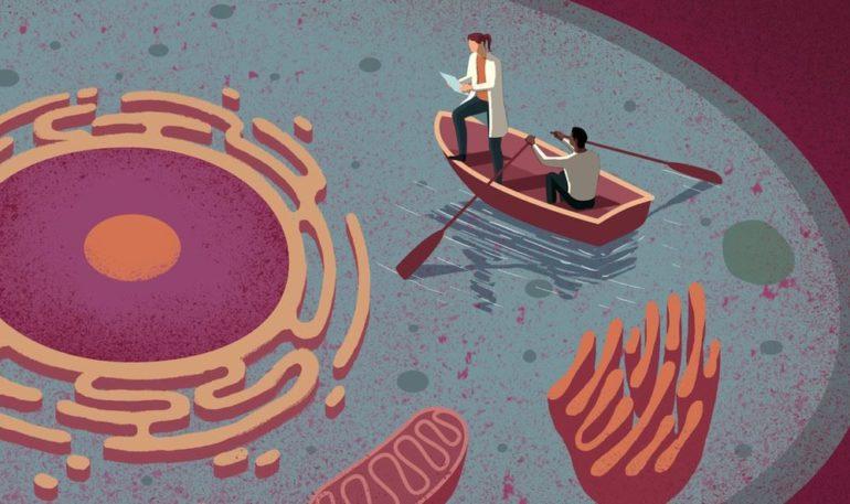 Клеточная биология: предотвращение транспортировки лекарств из клетки