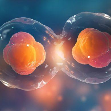 Как клетки контролируют деление