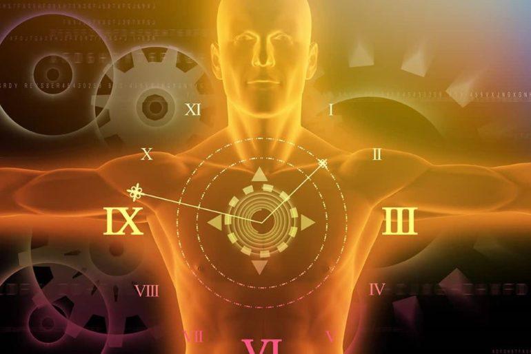 Циркадные часы: части тела реагируют на день и ночь независимо от мозга