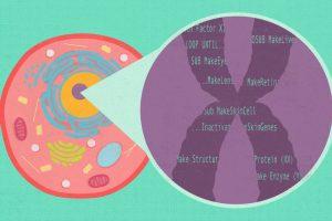 Как взаимодействуют гены для создания тканей и организмов