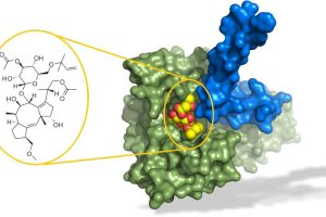 Молекулярный клей для преодоления лекарственной устойчивости рака