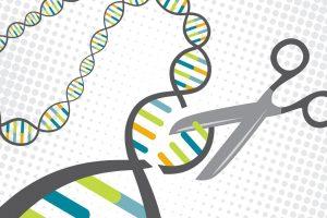 Молекулярные ножницы стабилизируют цитоскелет клетки